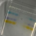 PCR 8